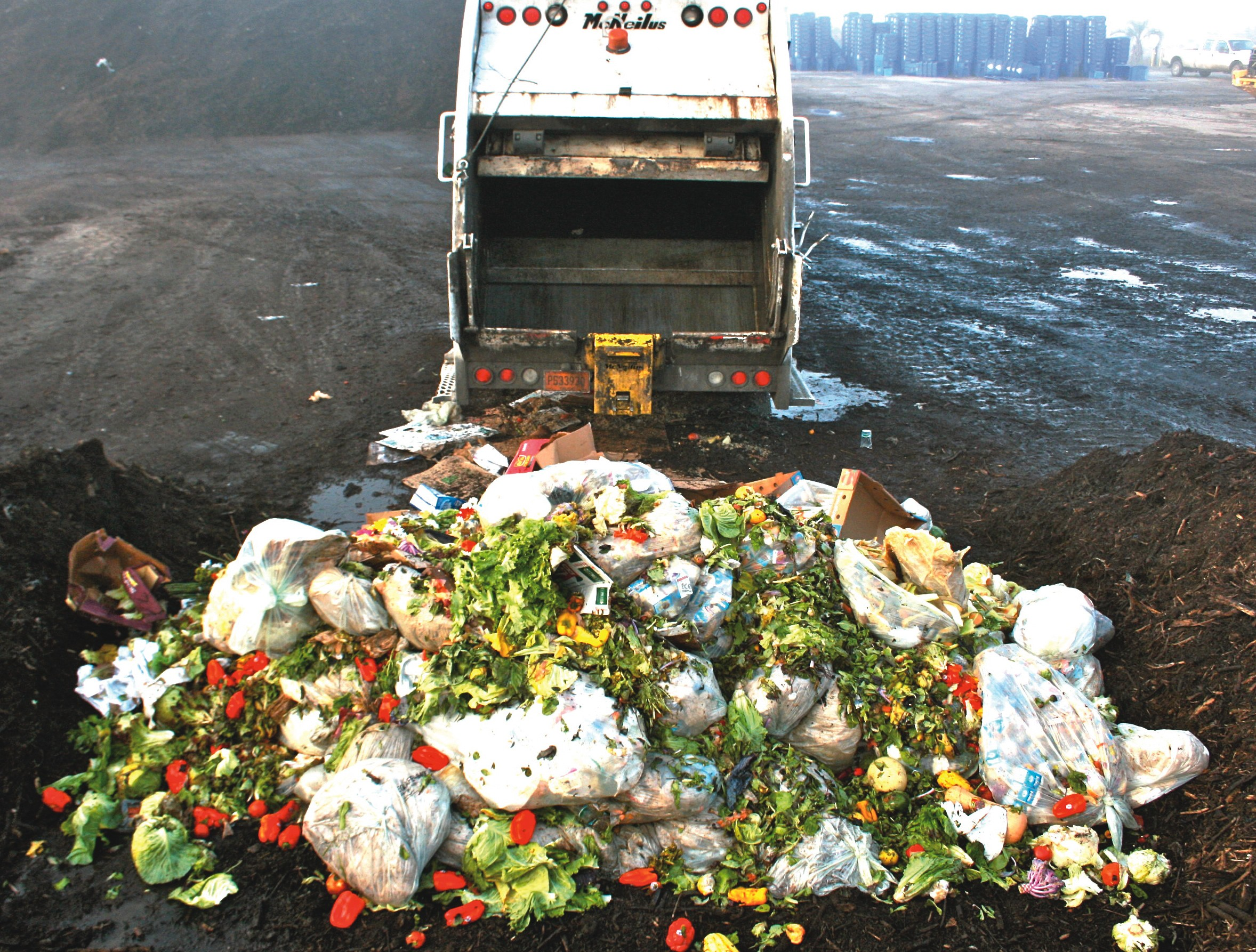 food waste in america essay Free essay: food waste position/proposal by natalie parisi an  the amount of  food waste in america has increased by fifty percent in the last.