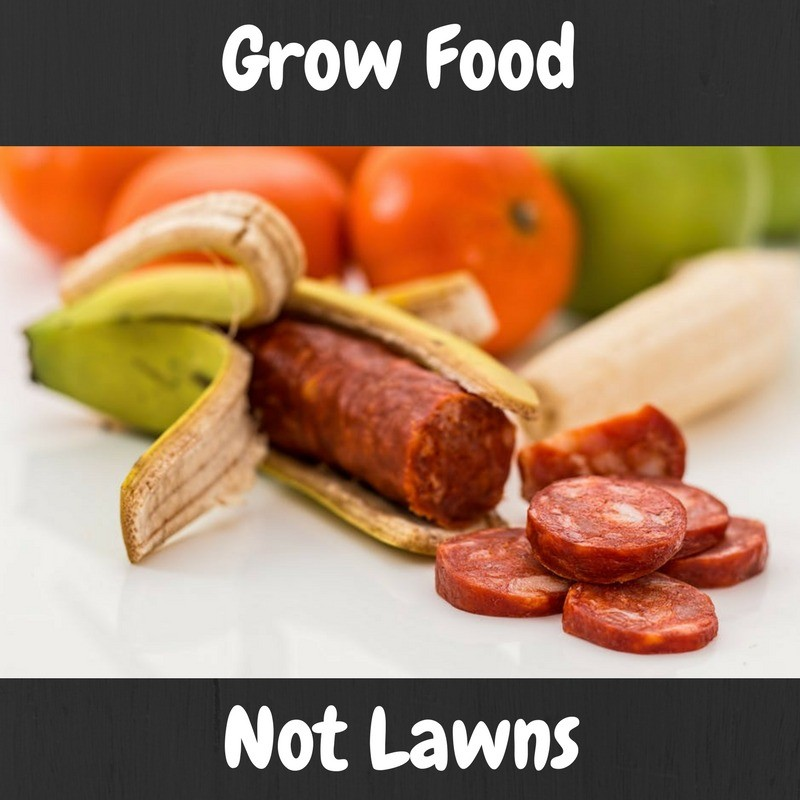 Grow Food Not Lawns and Start an Urban Garden Today