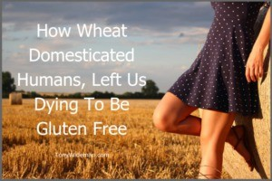 How Wheat Domesticated Humans