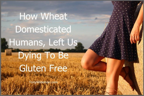 How Wheat Domesticated Humans, Left Us Dying To Be Gluten Free